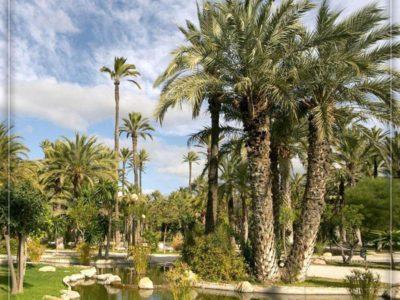 اسپانیا، الچه (شهر درختان نخل)
